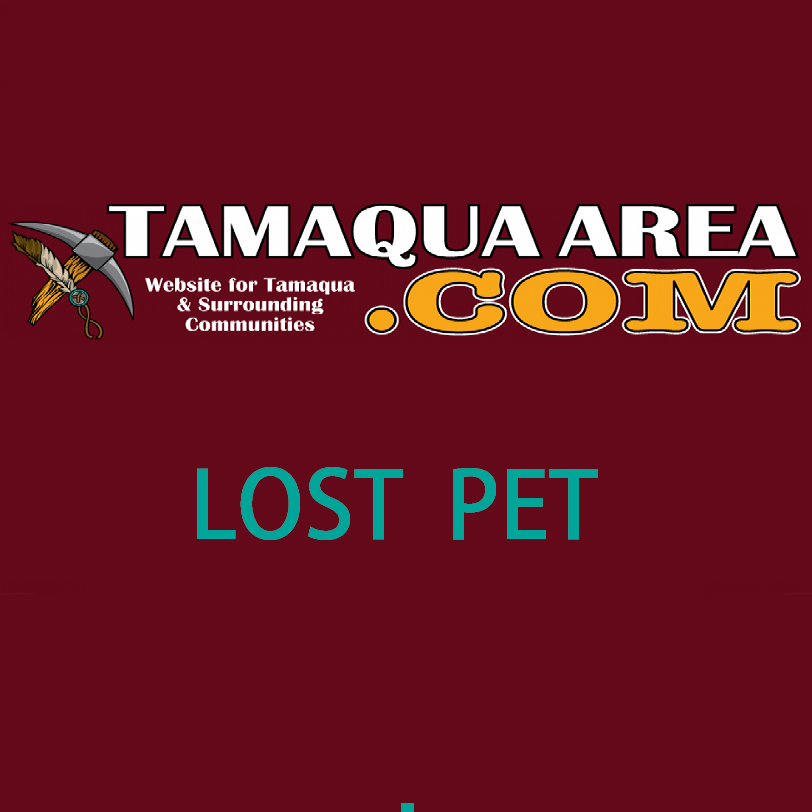 Lost German Shepherd in Tamaqua
